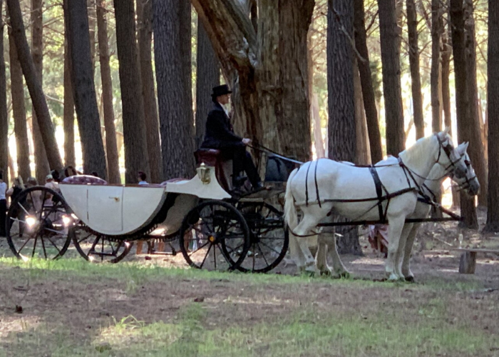 Carriage of Occasion Strathalbyn Wedding Tours (1)